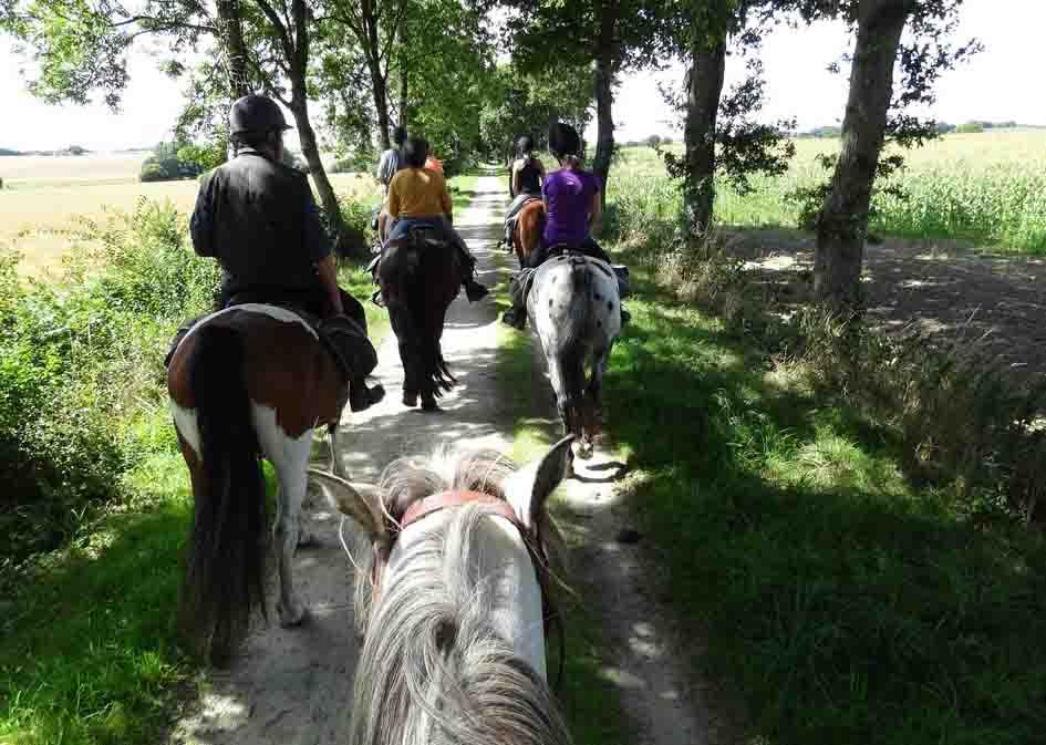 horse riding mini 4