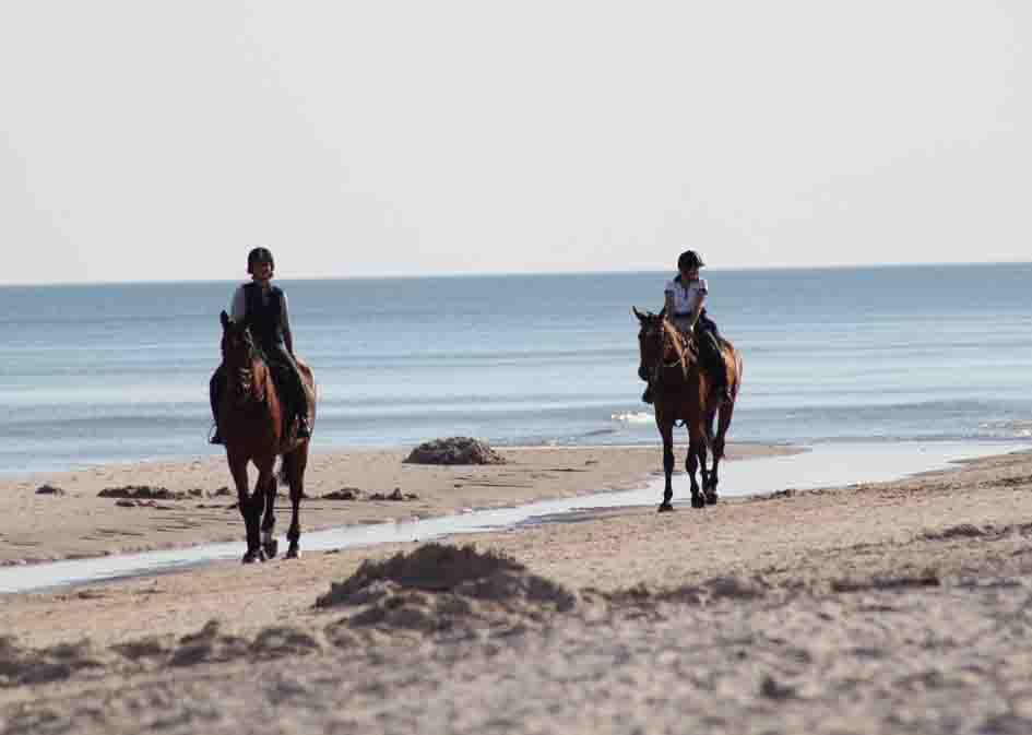horse riding mini 3